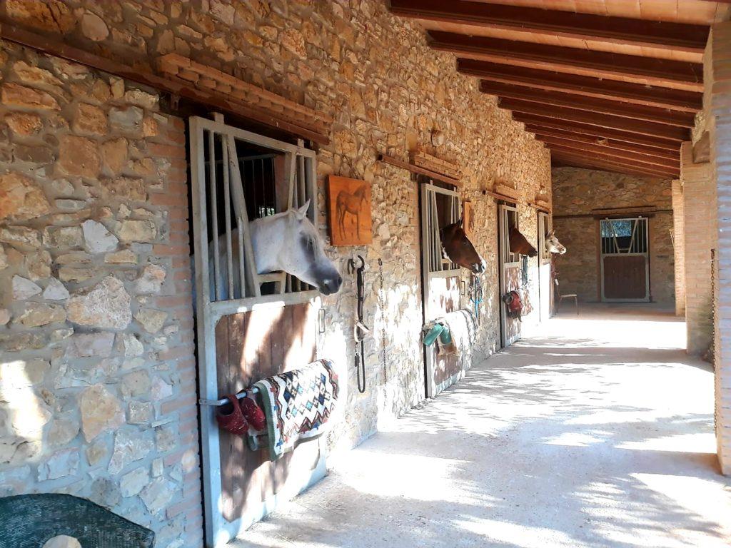Le scuderie in muratura offrono 20 ampi box, selleria, club-house e molto altro ancora...