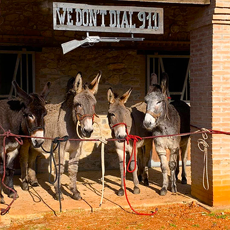 Donkey trekking, a different and slow experience