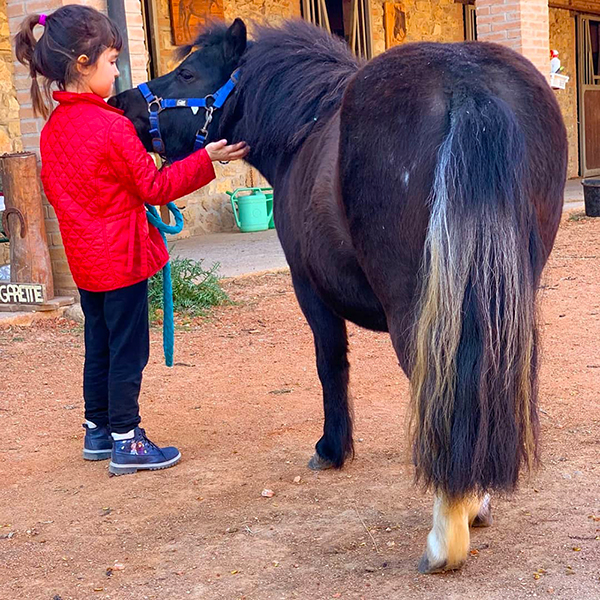 Sweet ponies for baby cowboys & cowgirls