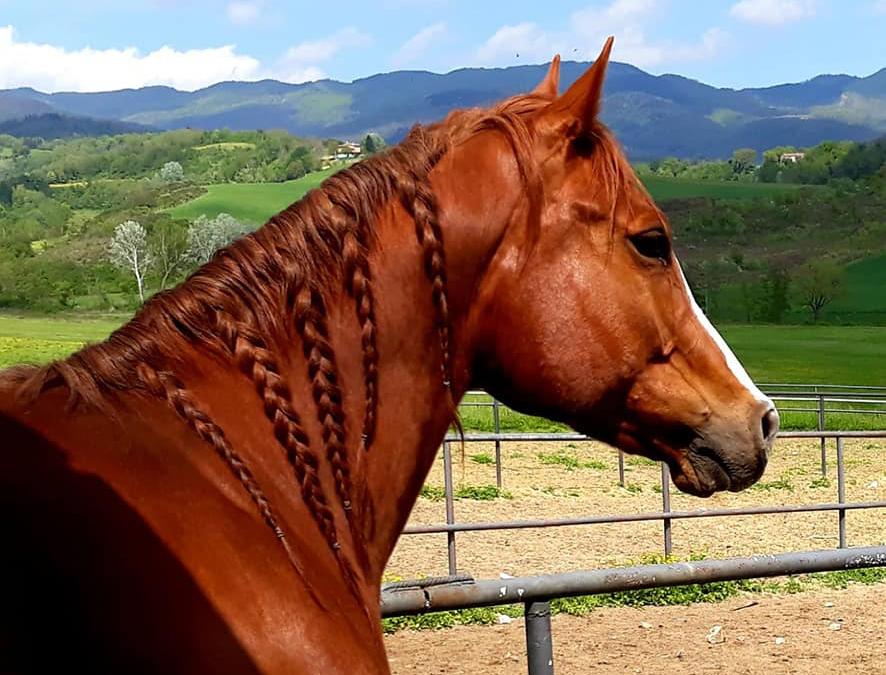 Quarter horse, il cavallo che ai tempi del Far West consentiva di mantenere i contatti tra una città e l'altra