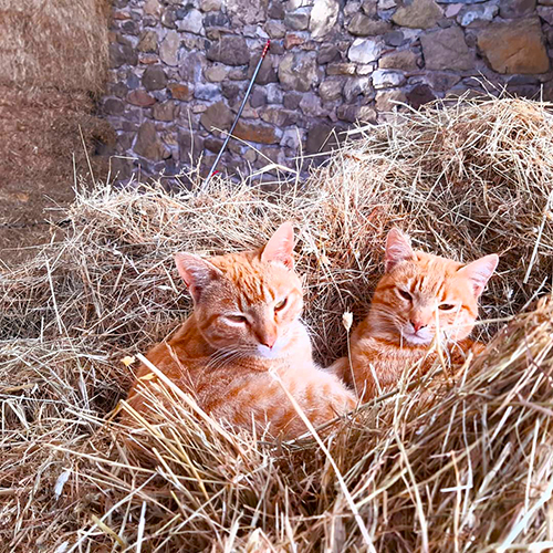Our red kittens